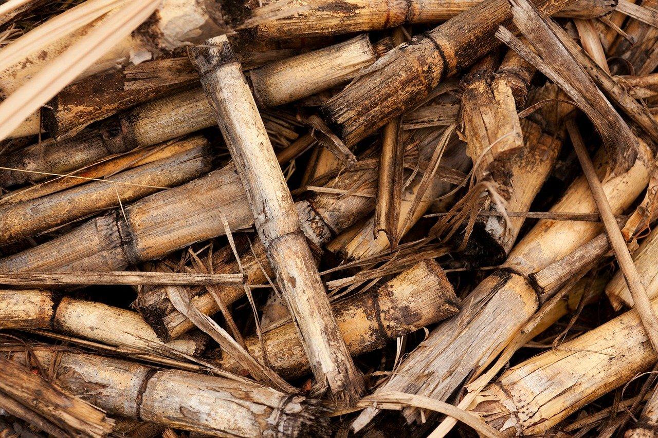 biomass energy source